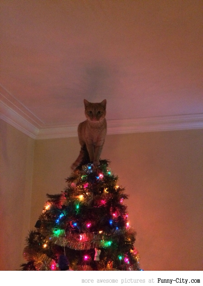 Cats setting up christmas trees (10 photos)