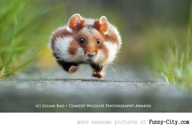 Winners of The Comedy Wildlife photography awards 2015 (13 photos)