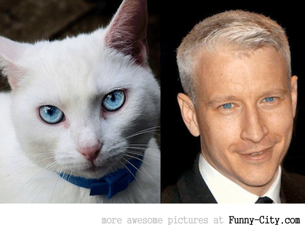 Celebrities and their animal Doppelganger (18 photos)