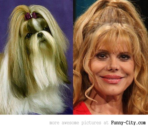 Celebrities and their animal Doppelganger (18 photos) [9273]